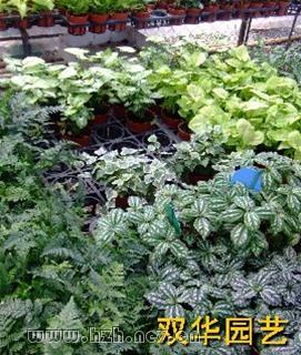 养护室外植物,绿化养护,办公楼绿化养护